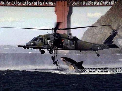 sharkattack!