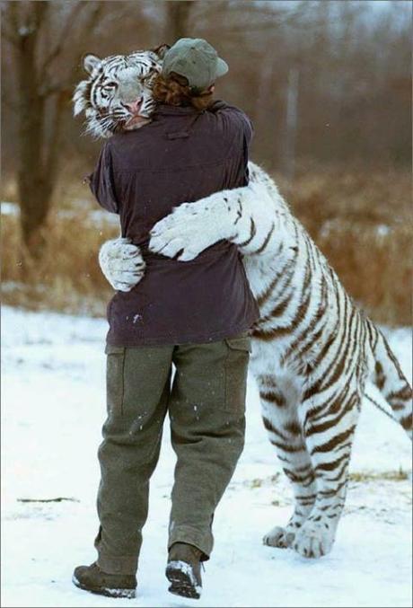 TigerHug!